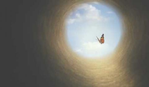 Schmetterling, Bild von Christine Conti, stock.adobe.com